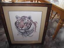 Tiger picture Claremont Glenorchy Area Preview