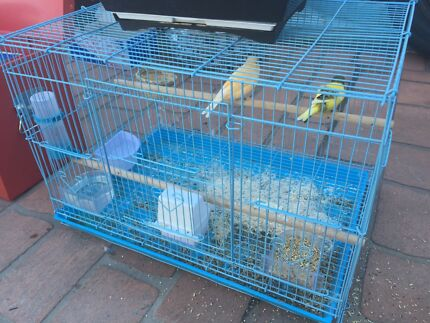 Pear canary male and female for sale with small cage Edensor Park Fairfield Area Preview