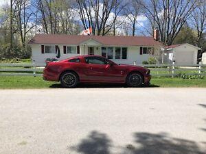 2014 Shelby GT 500, all original, 13,500 kms