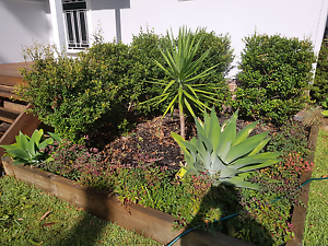 Various mature plants $20 each Yowie Bay Sutherland Area Preview