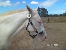 Assorted horse gear for sale Bundaberg Central Bundaberg City Preview