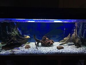 5foot Fish Tank and stand Beerwah Caloundra Area Preview