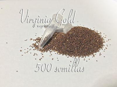 Tabaco Virginia Gold 500 Semillas de Tabaco Golden Virginia segunda mano  Cortijo El Copero