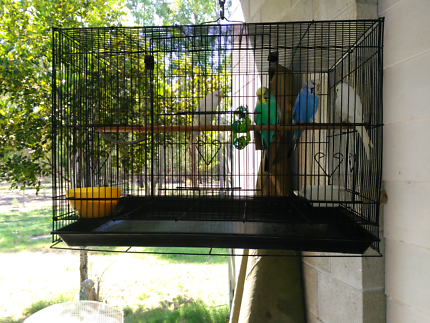 Budgies and cages