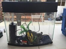 Small smart looking fish tank Currumbin Gold Coast South Preview