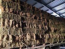 LUCERNE HAY Cambrai Mid Murray Preview