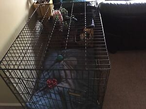 Large crate with divider (kelowna)