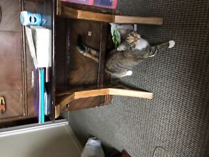 Free 61/2 month old cat