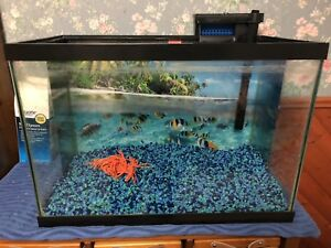 20 gallon fish tank includes everything