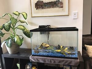 30 gallon aquarium with 4 goldfish