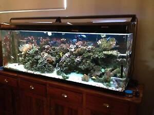 Marine fish tank aquarium 6x2x1.5ft  for sale with 6x4 trailer Secret Harbour Rockingham Area Preview