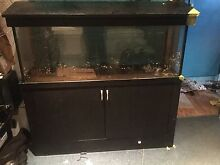 4 foot fish tank, cabinet and hood Golden Beach Caloundra Area Preview
