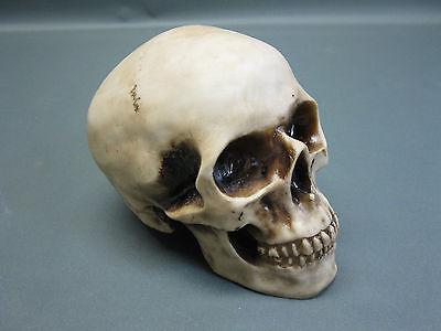 Декоративные фигуры Skull Paperweight 7 7/8in