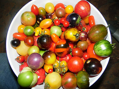 Pack of 100 Seeds From a Mix of 50 DIFFERENT KINDS of Cherry Tomatoes! See List