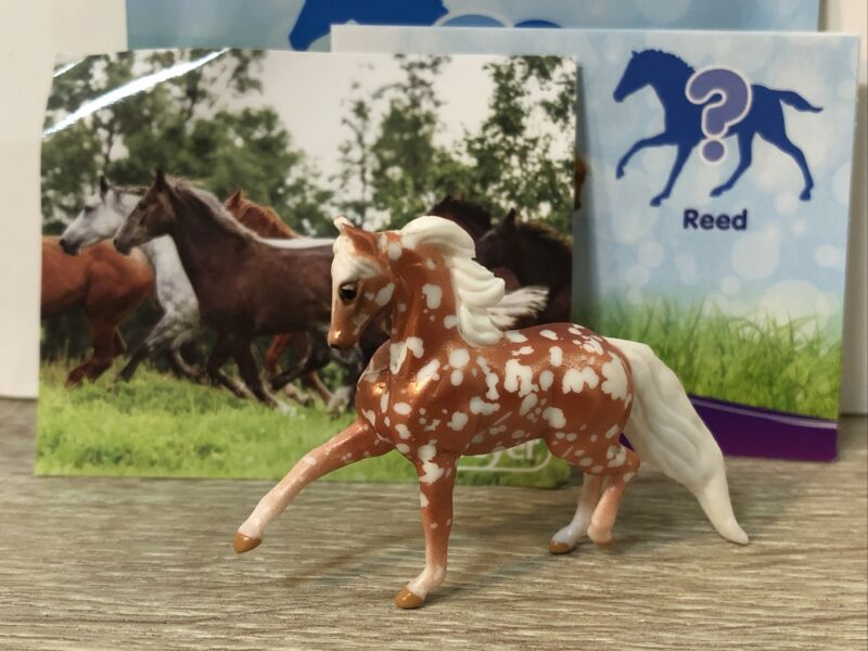 Breyer Mini Whinnies Series 5 Reed Rare Chase Cooper Spotted New Opened Bag
