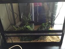 Reptile one tank Sorrento Joondalup Area Preview