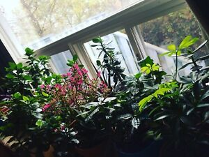 House plants wanted