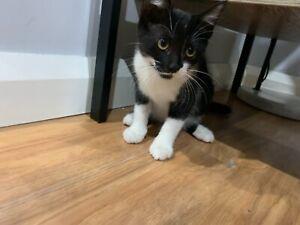 Kitten. Cat. Black and White