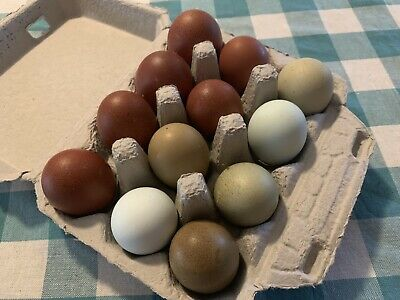 12 Fertile Hatching Eggs Black Copper Marans Olive Eggers Npip