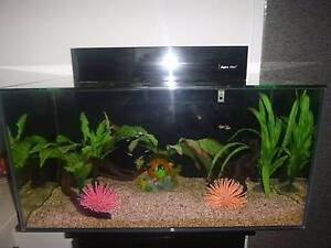Fish   Gumtree Australia Free Local Classifieds Gumtree Aqua One Fish Tank  Fish and Accessories