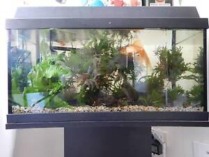 Fish tank, (also stand and accessories) Ashfield Ashfield Area Preview