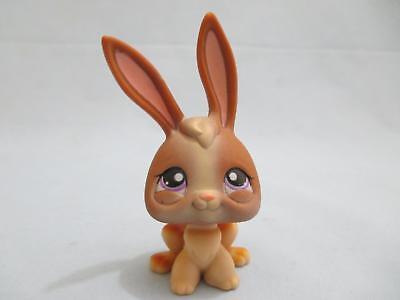 Littlest Pet Shop  Bunny Rabbit Long Ear Brown Purple 434  Authentic - Long Eared Bunny