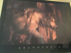 Tableau laminé loup/Wolf laminated picture