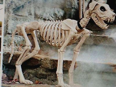 GRANDINROAD NEW SHADOW SKELETON DOG on Leash goth - Halloween Dog Skeleton On Leash