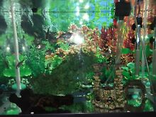 Blue planet 70 lt fish tank with stand and fish Watsonia Banyule Area Preview