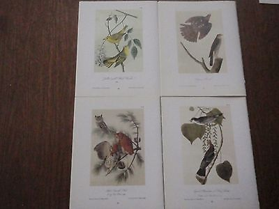 Lot of 40 Vintage Audubon Bird Prints - Warblers, Swallows, Owls, Hawks, etc