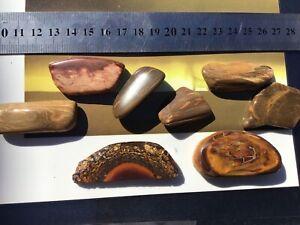 Natural Opal Stones Plus Petrified Wood B