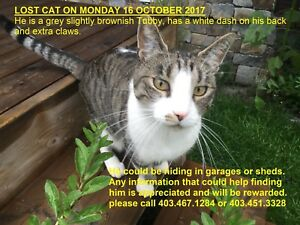 Lost Tabby in Fairview + Lost Cat