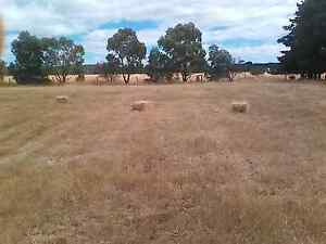 Grass hay new seasons Rokewood Golden Plains Preview