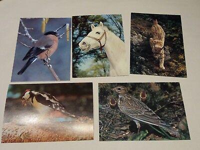 5 Postkarten ungelaufen Jugendherbergswerk 1972 & in Bayern geschützte Tiere