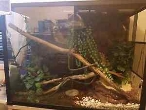 Reptile Enclosure Mount Hutton Lake Macquarie Area Preview