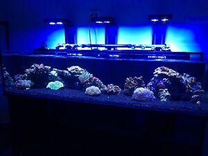 Saltwater Aquarium Refills