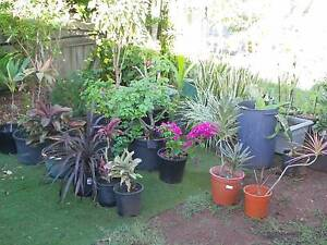 GIANT PLANT AND POT SALE Victoria Point Redland Area Preview