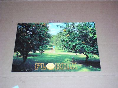 Florida Orange Grove Fruit Orchard Tourist Vacation Sunshine State Harvest