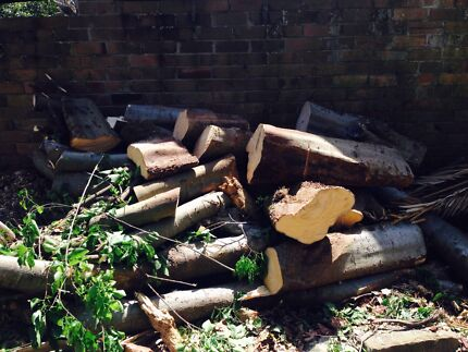 Free firewood Waverley Eastern Suburbs Preview