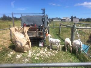 Mobile sheep, alpaca, goat and llama shearer. Pearcedale Casey Area Preview