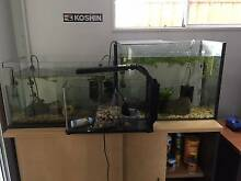 3 small fish tanks heaters angelfish guppies cat fish pumps etc Maroochydore Maroochydore Area Preview