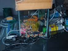 FISH TANK with accesories Mirrabooka Stirling Area Preview
