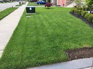 Grass cutting starting at $30 !!!!