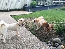 Coffs Harbour Doggy Day Care Coffs Harbour Coffs Harbour City Preview