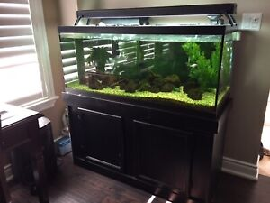 75 g fish tank w/cabinet stand
