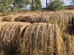 Mulch hay bales 5x4 Kingaroy South Burnett Area Preview