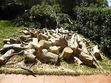 Free Firewood Chifley Eastern Suburbs Preview