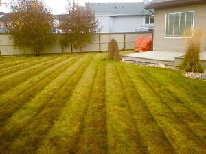 Spring clean up, lawn maintenance
