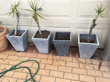 Outdoor plant pots Thornlands Redland Area Preview