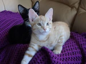 FREE KITTENS - NEED A LOVING HOME St Johns Park Fairfield Area Preview